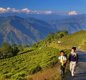 darjeeling-right_4__1